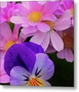 Daisy And Pansy Metal Print
