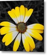 Daisy Crown Metal Print