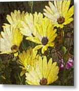Daisy Daisy Metal Print by Tom Romeo