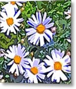 Daisy Flower Garden Abstract Metal Print