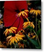 Daisy Went  Courtin Metal Print
