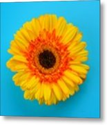 Daisy - Yellow - Orange On Light Blue Metal Print