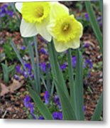 Dallas Daffodils 78 Metal Print
