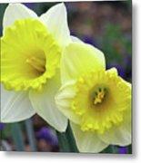 Dallas Daffodils 79 Metal Print