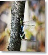 Dragonflies Need Love Too Metal Print