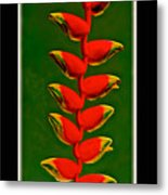Dance Of The Heliconias Metal Print
