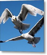 Aerial Dance Of The Seagulls Metal Print