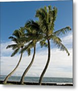Dancing Coconut Tree Metal Print