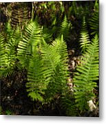 Dancing Ferns Metal Print