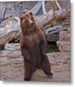 Dancing Grizzly Metal Print