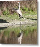 Dancing On The Pond Metal Print