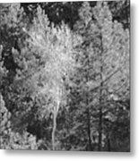 Dancing Tree Metal Print