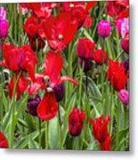 Dancing Tulips Metal Print