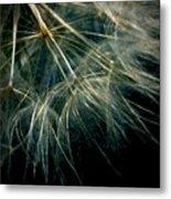 Dandelion Eighty Six Metal Print