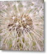 Dandelion Fireworks Metal Print