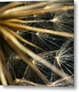 Dandelion Forty Three Metal Print