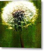 Dandelion In Green Metal Print