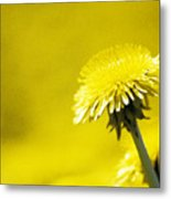 Dandelion In Yellow Metal Print