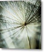 Dandelion Petals Metal Print