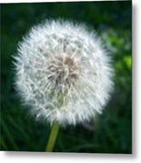 Dandelion Seeds 107 Metal Print