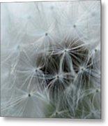 Dandelion Seeds Close-up Metal Print