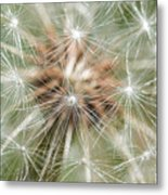 Dandelion Sparkles Metal Print