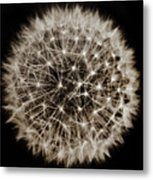 Dandelion Sun Metal Print