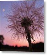 Dandelion Sunset Metal Print