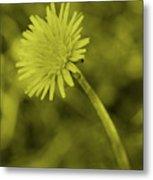 Dandelion Tint Metal Print