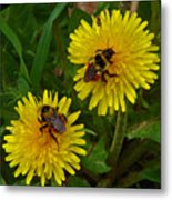 Dandelions And Bees Metal Print