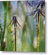 Dandelions Close-up Metal Print