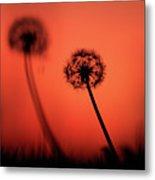 Dandelions Silhouettes At Sunset Metal Print