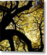 Dangerous Curves Metal Print