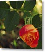 Dangling Rose Metal Print