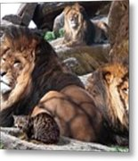 Daniel In The Lion Metal Print