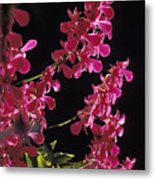Danrobium Orchids Used To Make Lais Metal Print