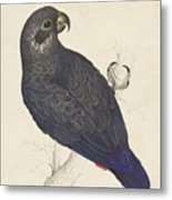 Dark Blue Parrot Metal Print