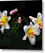 Dark Day Bright Lilies Metal Print