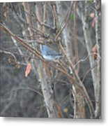 Dark Eyed Junco Perched On Tree Limb Metal Print