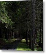 Dark Forest Road Metal Print