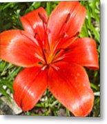 Dark Orange Red Lily II Metal Print
