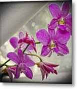 Dark Pink Orchids All In A Row Metal Print by Eva Thomas