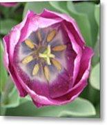Dark Pink Tulip Metal Print