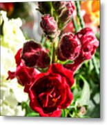 Dark Red Fancy Snapdragon Metal Print