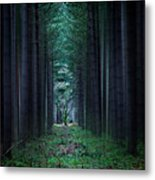 Dark Side Of Forest Metal Print