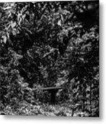 Dark Summer Woods Metal Print