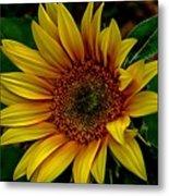 Dark Sunflower Metal Print