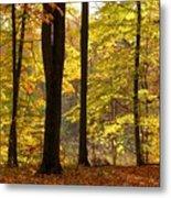 Dark Trunks Bright Leaves Metal Print