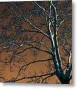 Dark Woods II Metal Print