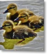 Darling Ducks Metal Print